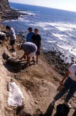 Bones of sauropod dinosaurs are commonly found in Portugal