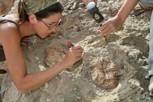 Simone is excavating articulated Late Jurassic turtle shells